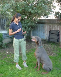 Dog Trainer Shelly, day training with dog at house
